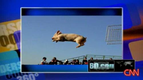 Miss Piggy flies through the air during a pig contest